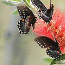 butterflys in motion by jon  daly