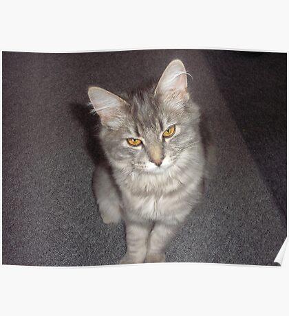 Gray Cat My Princesse Poster