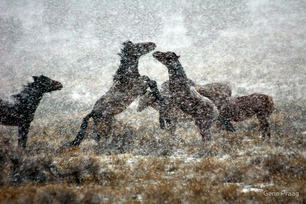 Storm Fight by Gene Praag