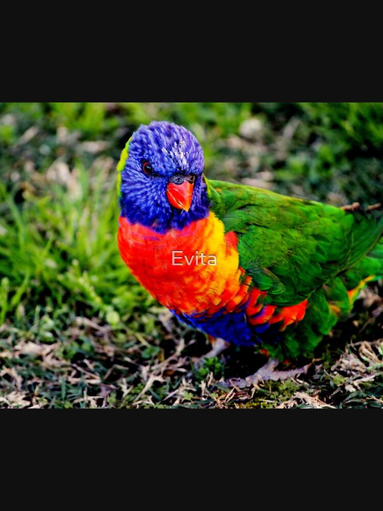 Bunter Vogel - Regenbogen Lorikeet von Evita