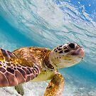 Sea turtle selfie - duvet by Kara Murphy