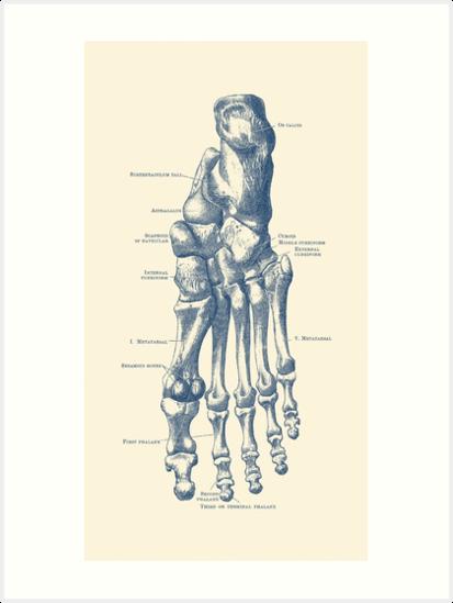 Láminas artísticas «Diagrama esquelético del pie izquierdo» de ...