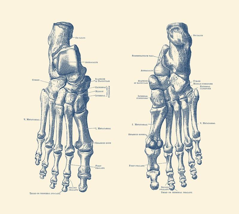 Bonito Diagrama De Pie Anatomía Embellecimiento - Anatomía de Las ...
