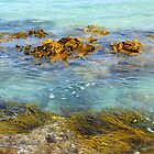 Bull Kelp Beds -  Recherche Bay, Tasmania by Lexa Harpell