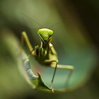 Portrait of a Praying mantis I by AnnaKT