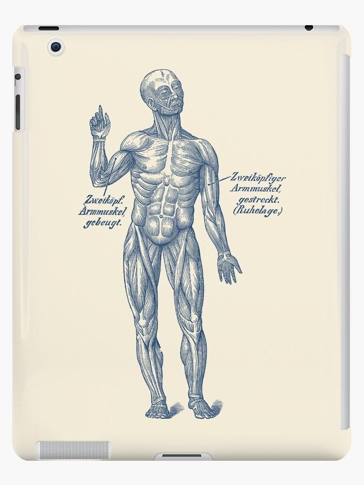 Vinilos y fundas para iPad «Sistema Muscular del Brazo - Diagrama ...