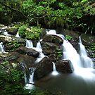 Coomera Creek by Liam MacKenzie