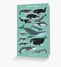 Baleen Whales Greeting Card