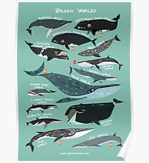 Baleen Whales Poster