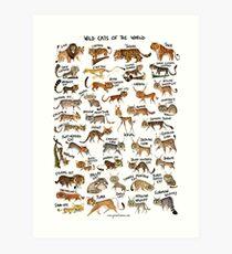 Wildkatzen der Welt Kunstdruck