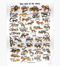 Wildkatzen der Welt Poster