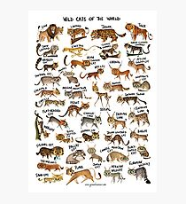 Wild Cats of the World Photographic Print