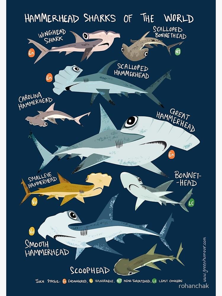 Hammerhead Sharks of the World by rohanchak