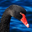 Black Swan by Patricia Gibson
