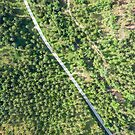 Aerial view of road through a palm tree forest by Lukasz Szczepanski