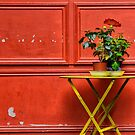 Red Wall, Green Plant by cclaude