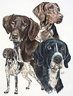 German Short-Haired Pointer Collage by BarbBarcikKeith