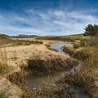 Amongst the dunes  by eddiej