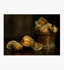 Cape Gooseberries Photographic Print
