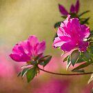 Morning Azaleas by Jonicool