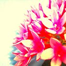 Pretty by Vanessa Barklay