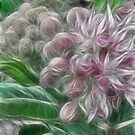 Hues of Pink by Jody Johnson