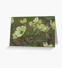 Dogwood Greeting Card