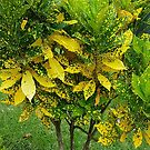 Lush In Yellow and Green by Vickie Emms