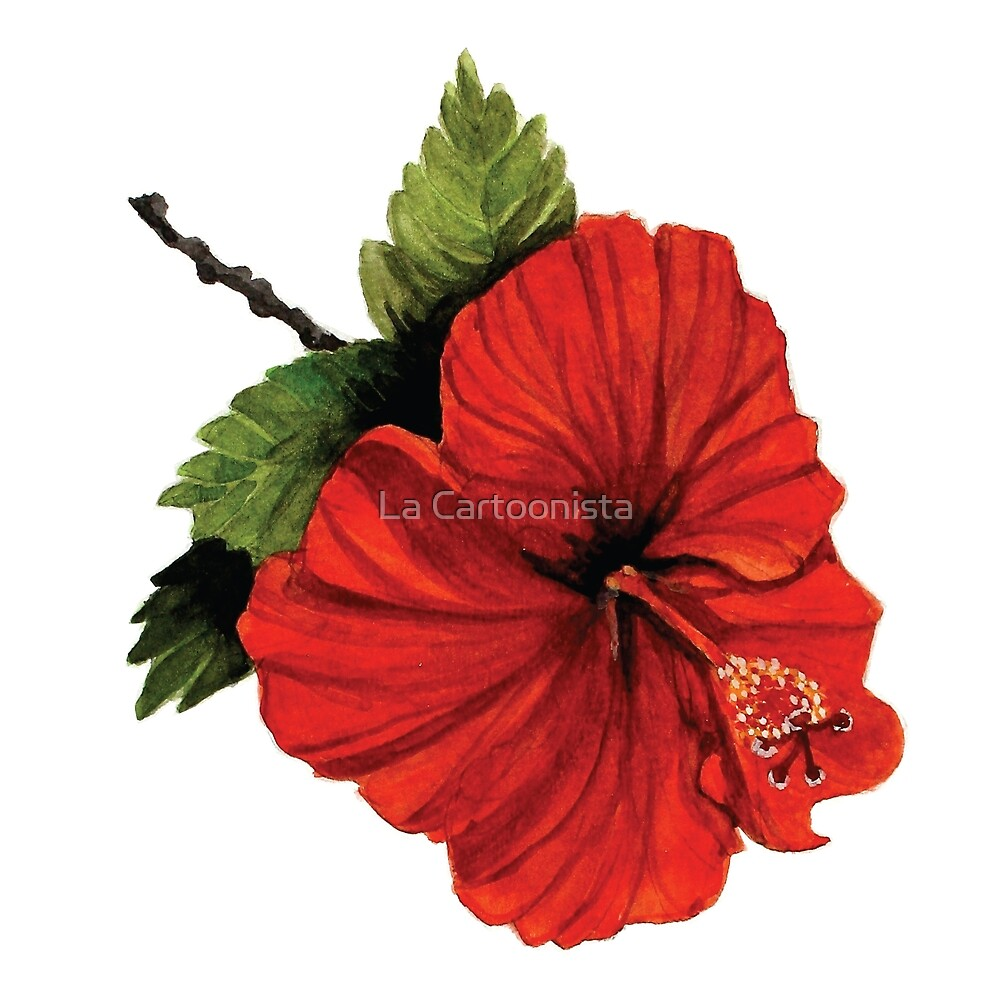 Watercolor painting of a red hibiscus flower by michele paccione watercolor painting of a red hibiscus flower by michele paccione izmirmasajfo