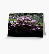Pinks in the Forest Greeting Card