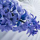 Blue Hyacinth by Ann Garrett