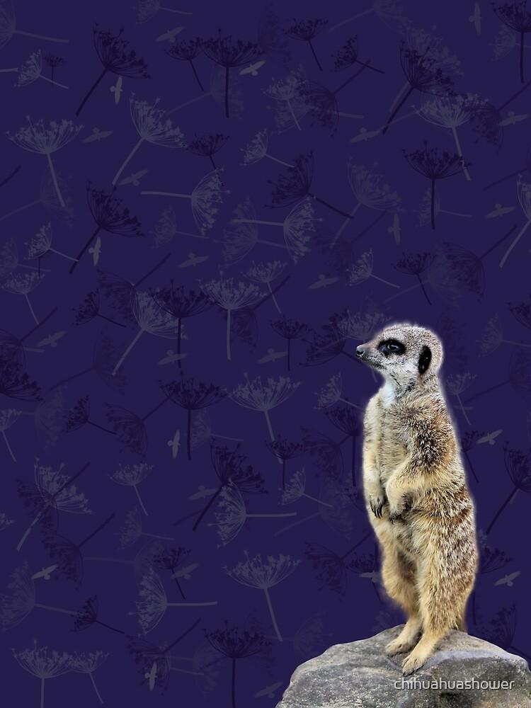 Meerkat  by chihuahuashower