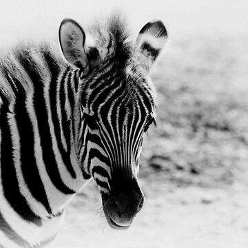 Zebra Portrait I by tenia115