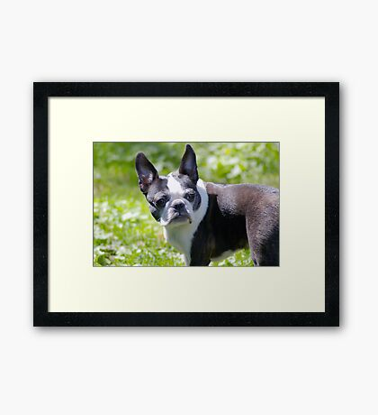 Wait, what was that? Framed Print