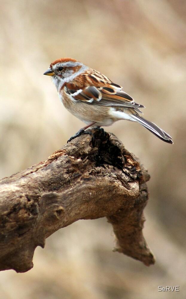 Bird on Driftwood by SeRVE