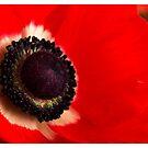 Anemone by Ronny Falkenstein