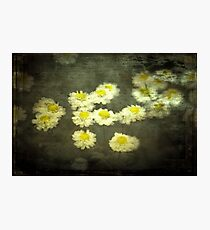 Daisies in Grunge Photographic Print
