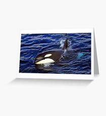 Killer Whale #20  Greeting Card