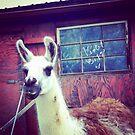 Pretty Llama by VioletBiggs