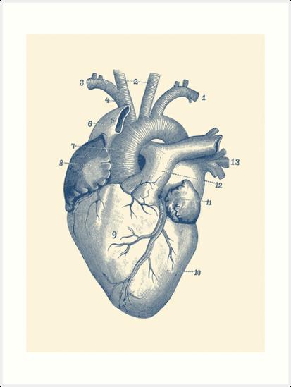 Láminas artísticas «Diagrama del corazón humano - Anatomía de la ...