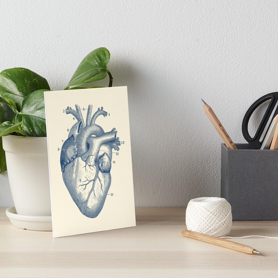 Láminas de exposición «Diagrama del corazón humano - Anatomía de la ...