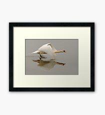 Swan Taking Flight Framed Print