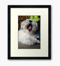 Sing Along Teddy Framed Print
