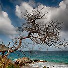 The Tree At The Cay by Andreas Mueller
