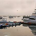 Morning at the Harbor by John  Kapusta