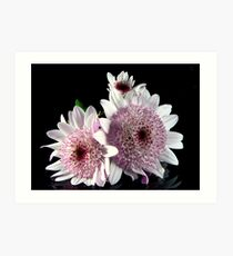Miniature Dahlias Art Print