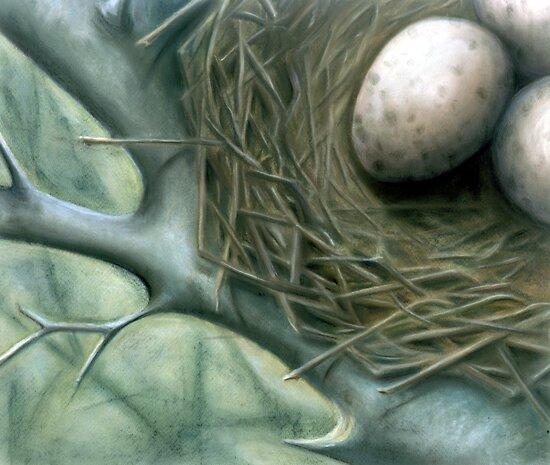 Bird Nest by A.H. Thom
