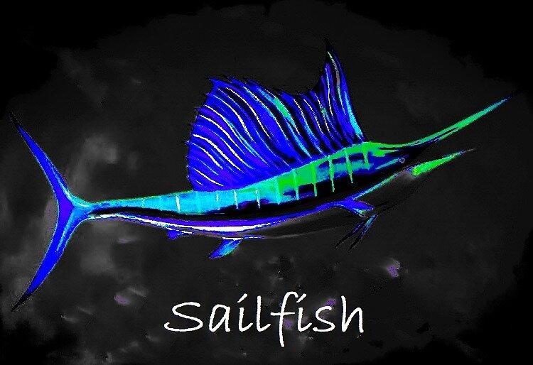 Sailfish by barryknauff