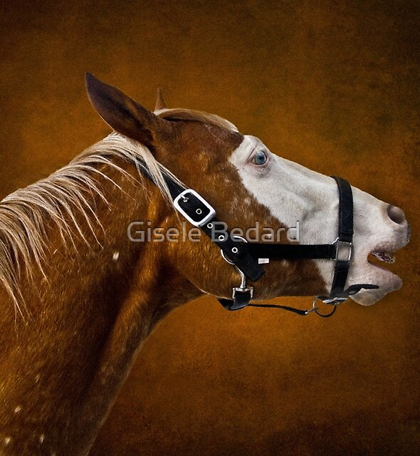 White face by Gisele Bedard