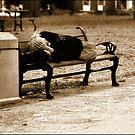 Homeless  by ShahnaChristine .